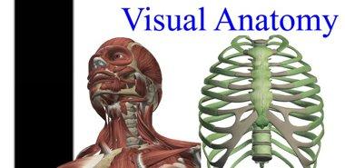 شناخت آناتومی بدن انسان با Visual Anatomy v3.3 – اندروید